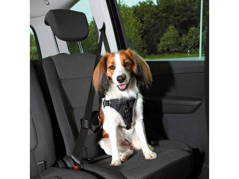 Trixie Auto Hondentuig Dog Protect