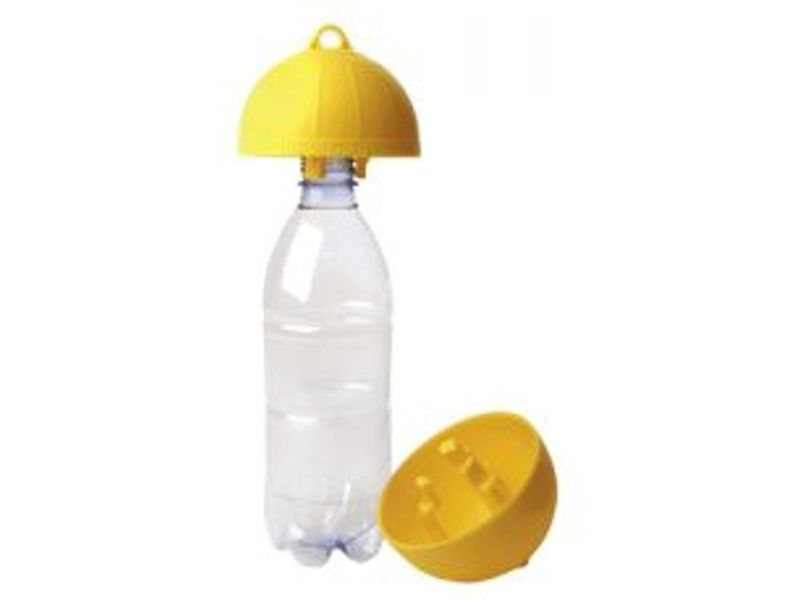 Wespenval op fles wesp