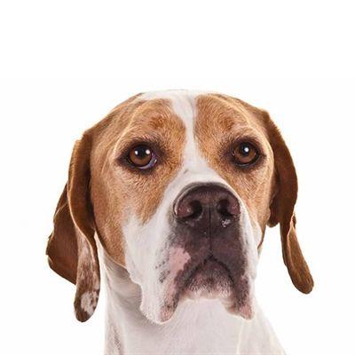 Yourdog Pointer Volwassen 12 Kg