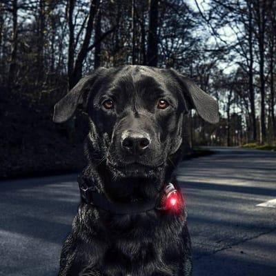 Orbiloc dog dual veiligheidslamp led rood