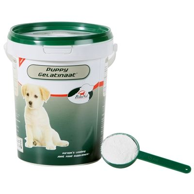 Primeval gelatinaat puppy