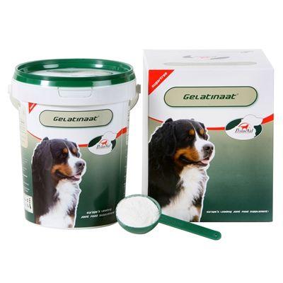 Primeval gelatinaat hond