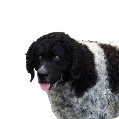 Yourdog Wetterhoun Senior 3 Kg