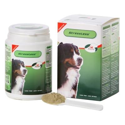 Primeval stressless hond
