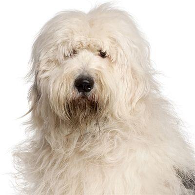 Yourdog Bobtail Volwassen 3 Kg